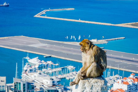 Macaque monkey sitting on the wall overlooking the Gibraltar city Stock Photo