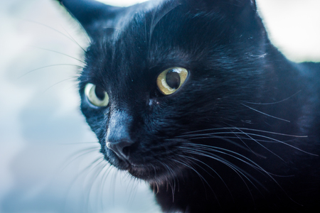 Portrait of black cat against light background Stock Photo