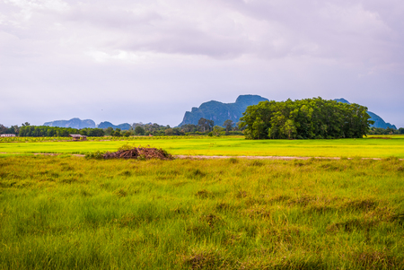 Fields in the outskirts of Phatthalung, Thailand 写真素材