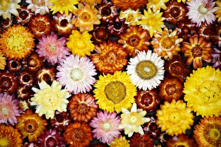 Dried flowers background photo