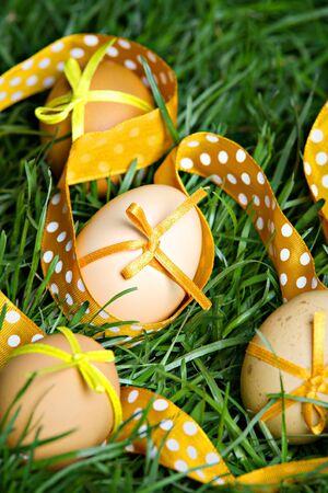 Easter eggs hidden in the grass photo