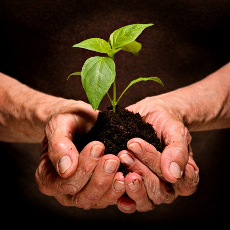 environmental protection:  Symbol of new life and environmental conservation.