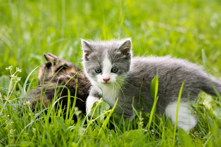 Two beautiful cats hidden in the grass  photo