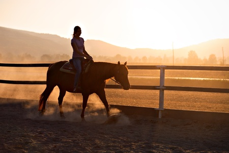 horses in field: Horseback riding in sunset light Stock Photo