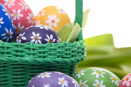 Easter concept with hand painted eggs, green basket and tulips, isolated on white photo