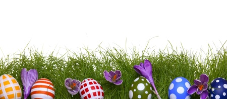 Hand-painted Easter eggs with crocus flowers, hidden in the grass, isolated on white with copy space  photo