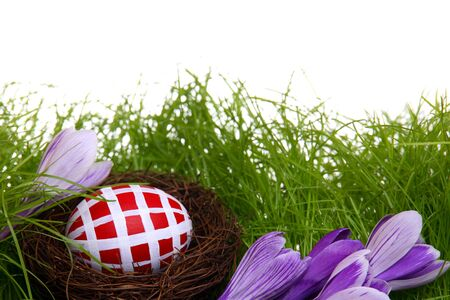 Hand-painted Easter egg hidden in the nest, with crocus flowers and grass, isolated on white  photo