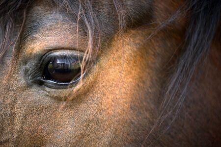 Horse eye closeup, horizontal Stock Photo - 13823790