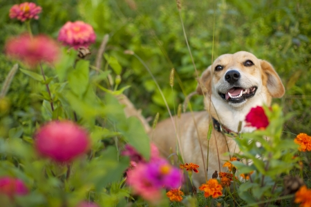 dog background: Happy Smiling Mixed Breed Dog
