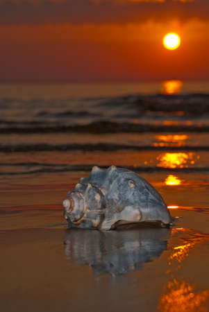 jurmala: sunset with seashell, baltic sea, Jurmala