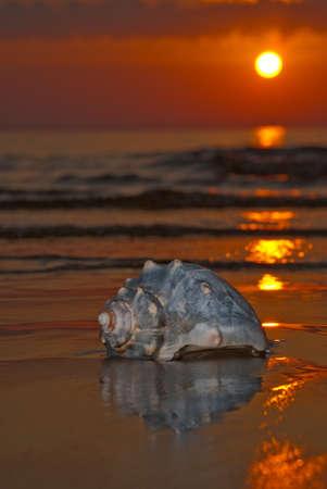 jurmala: sunset with seashell, baltic sea, Jurmala