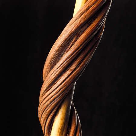 liana: liana close up