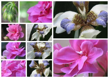 Flower collage 3