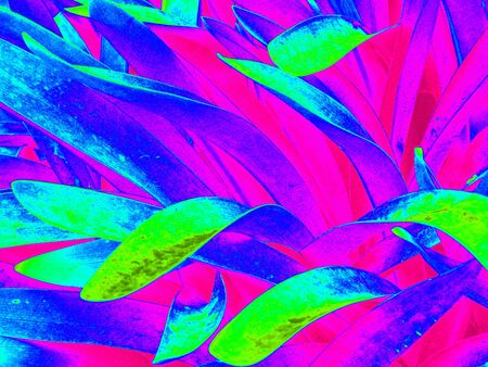 Agapanthus leaves, heat-map effect