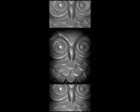 Owl collage photo