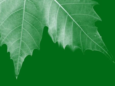 Gedroogde bladeren Stockfoto