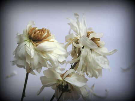 Fading flowers