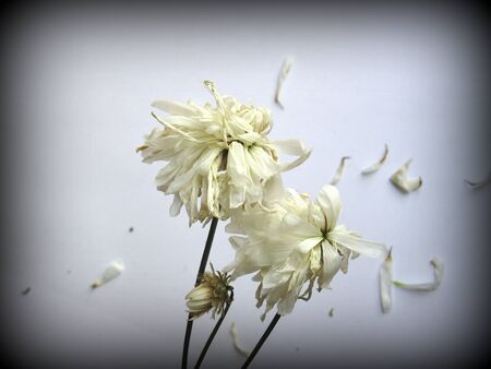 Fading flowers photo