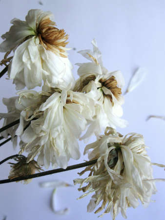fading: Fading flowers
