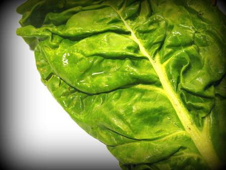chard: Chard leaf Stock Photo