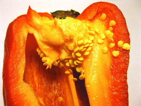 Inside bell pepper photo