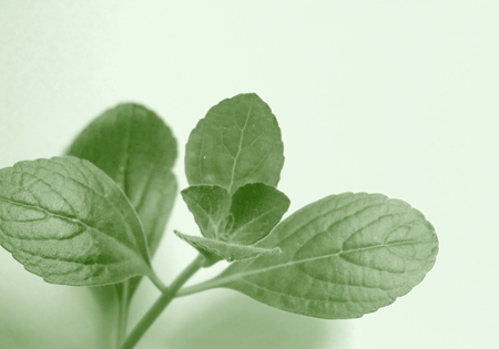 citronella leaves