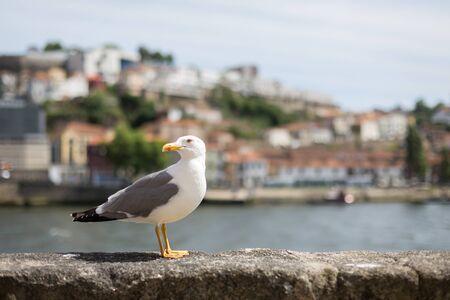urbanscape: Seagull Stock Photo