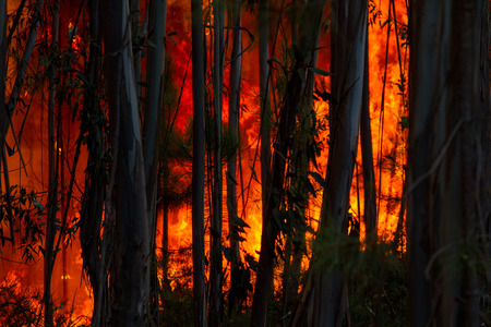 forest fire: Forest Fire