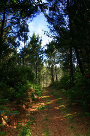 a forest of Portugal, where we obverse nature. photo
