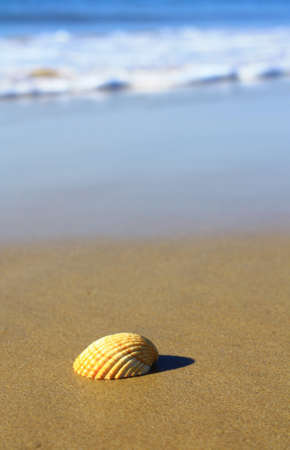 cockleshells: a maritime knowledge of an animal on the beach.