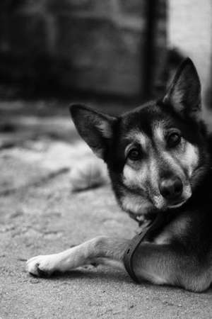admired: admired a dog, a pet for companionship.