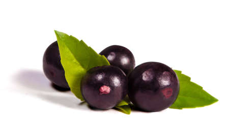 acai: The amazon acai fruit Stock Photo