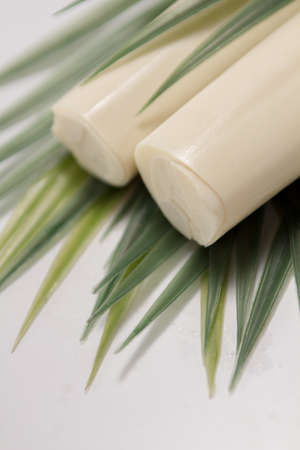 palmetto: Palmetto is a ingredient extracted from the acai palm tree