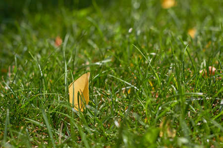 Autumn is coming. Fallen yellow leaf on green grass. Green natural grass background