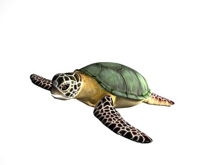 rendered: Rendered turtle on an isolated background Stock Photo