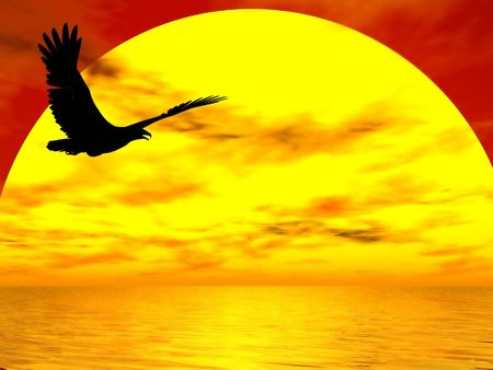 the setting sun: Eagle easily flying silhouetted against the setting sun