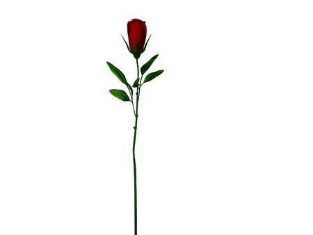 Isolé longue tige rose Banque d'images - 290855