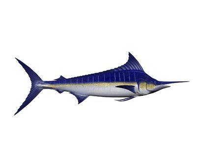 sailfish: Isolated marlin Stock Photo