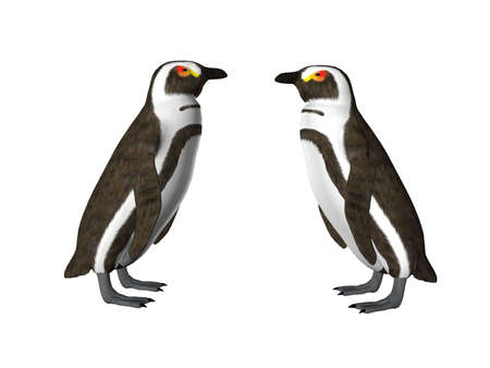 king penguins: Isolated penguin pair Stock Photo