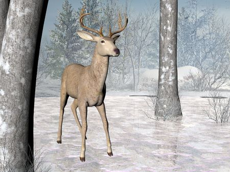 Deer in a winter forest