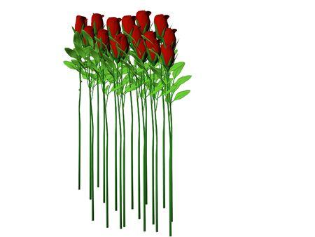 Isolated long stem roses photo