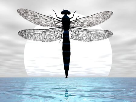 Dragonfly flying before the moon photo