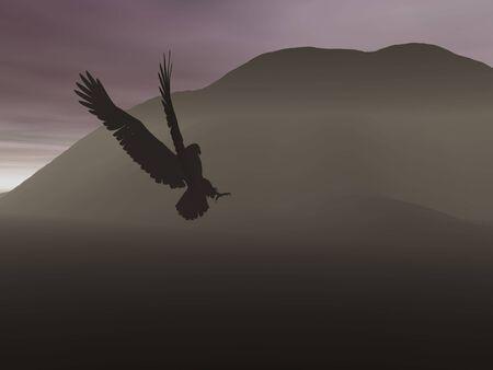 silhouette aquila: Eagle silhouette a sera Archivio Fotografico
