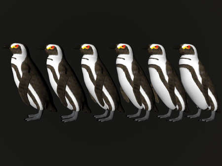 Isolated row of penguins