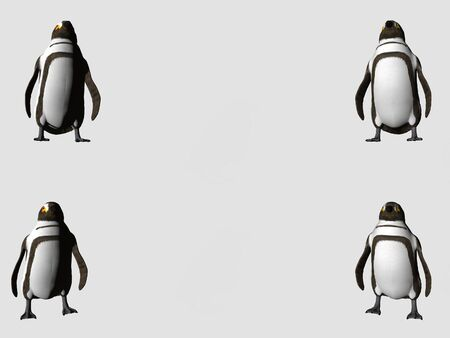Isolated penguins with copy space photo
