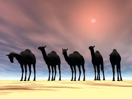 Desert camels in the sun photo