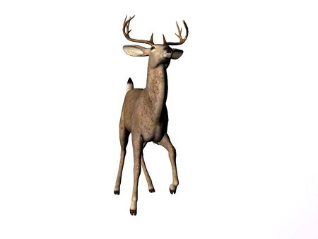 Geïsoleerde jonge mannelijke herten Stockfoto