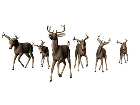 Isolated young male deer herd