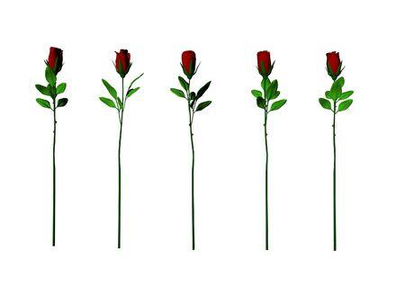 Cinq souches isolées long roses Banque d'images - 326425