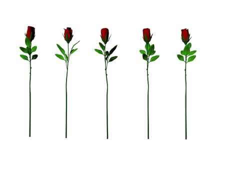 Five isolated long stem roses